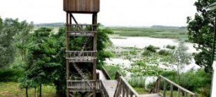 Efteni Gölü Nerede, Nasıl Gidilir – Melen Gölü / Gölyaka ilçesi / Düzce